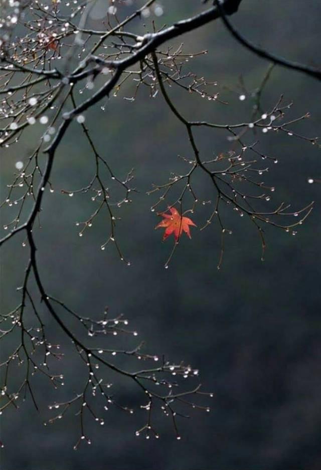 The last leaf_o