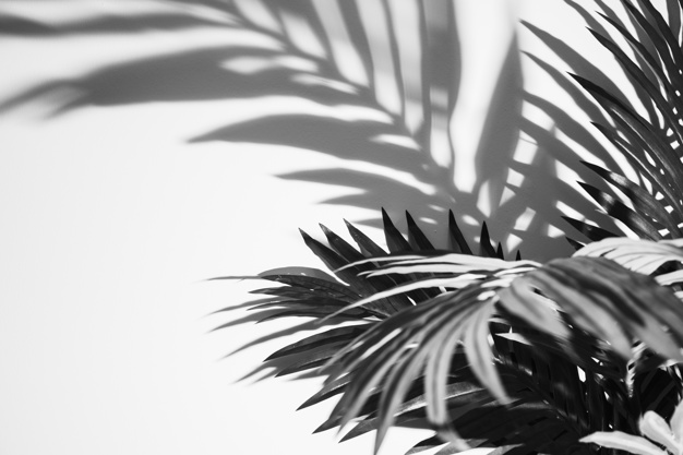 monochromatic-palm-leaves-shadow-white-backdrop_23-2148162940