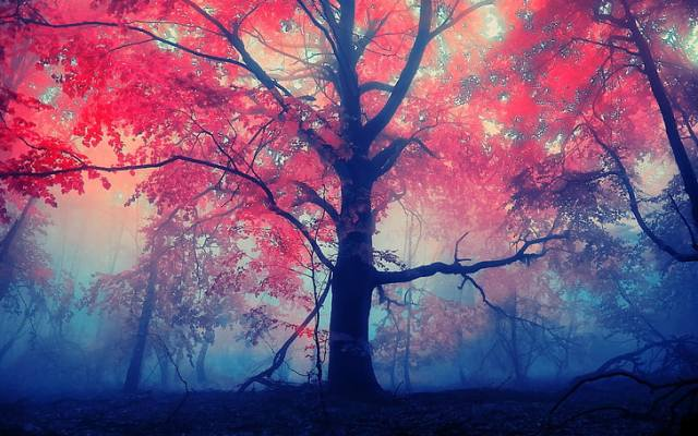 trees-forest-fall-mist-wallpaper-preview